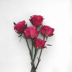 Flower Phone Wallpaper, Pink Wallpaper Iphone, Flower Wallpaper, Beautiful Flowers Wallpapers, Most Beautiful Flowers, Summer Flower Arrangements, Summer Flowers, Lovely Girl Image, Sky Lanterns