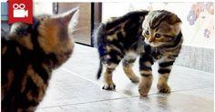 Very Cute Ninja Kittens <3  Watch here: http://meowaum.com/1936-very-cute-ninja-kittens/