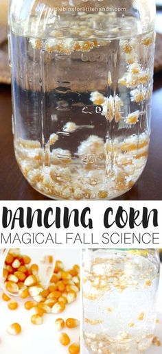 Magical fall science with easy to set up dancing corn! Set up a fun and easy dancing corn thanksgiving science activity this season! Great for fall science and activities using corn. Harvest science activity that is easy to do with kids in the kitchen.