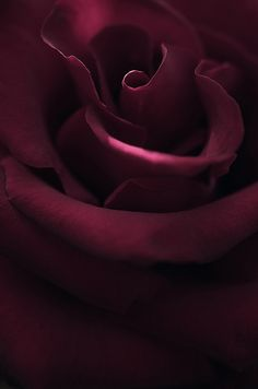 <3 Ahhh, a rose which is the perfect shade for this board :-)