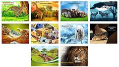 Check out our professionally designed and world class zoology check out our professionally designed and world class wildlife safari powerpoint toneelgroepblik Gallery
