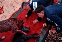 Image detail for -The action against cruelty to animals will be held May 15 in Moscow ...