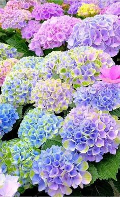 Find images and videos about beautiful, blue and flowers on We Heart It - the app to get lost in what you love. Hydrangea Landscaping, Hydrangea Garden, Love Garden, Dream Garden, Amazing Flowers, Beautiful Flowers, Window Box Flowers, Flowery Wallpaper, Beautiful Flower Arrangements