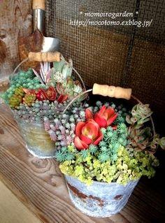 Great idea for patio...buckets of succulents - adventureideaz.comadventureideaz.com