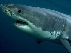 El mayor mercado del mundo de aletas de tiburón.