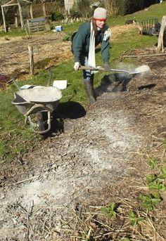 cendre de bois au jardin
