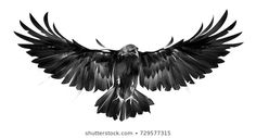 Find isolated picture of bird crows on white background in front stock illustrations and royalty free photos in HD. of new pictures added daily. Crow Tattoo For Men, Crow Tattoo Design, Bird Tattoo Men, Raven Tattoo, Tattoos For Guys, Tattoo Designs, Eagle Chest Tattoo, Eagle Tattoos, Star Tattoos
