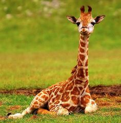 An internet-famous baby giraffe named Kipenzi died after she ran into the perimeter of her habitat and snapped her neck. Urge national zoo officials to find alternative habitat structuring to prevent accidental deaths like this.