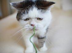 まこという名の不思議顔の猫 | 昨年の今日