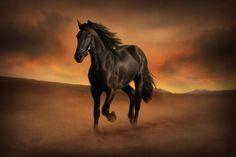 Freedom in the Desert