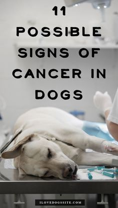 Please watch for these 11 things, it might save your dog's life! http://theilovedogssite.com/11-possible-signs-of-cancer-in-your-dog/