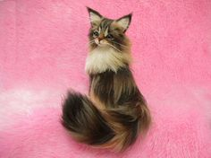 Needle Felted Beautiful Maine Coon: Miniature Wool Felt Cat amazing work