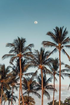 Full moon rising over palm trees at the beach in Tamarindo Costa Rica. Photographed by Kristen M. Brown, Samba to the Sea for The Sunset Shop.