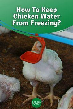 Hen Chicken, Chicken Coop Plans, Chickens In The Winter, Raising Backyard Chickens, Hobby Farms, Farm Gardens, Diy Chicken Waterer, Farm Animals, Chicken Coups