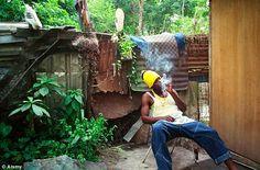 kingston jamaica hood