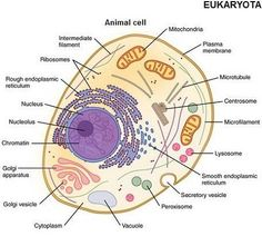 Microscopic pictures of everything | Molecular Expressions Cell ...