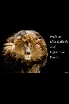 pictures of the lion of judah | The Lion of Judah | Lion Of Judah