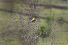 NATUR Vögel in Georgien Greifvögel & Singvögel