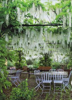 So reminds me of my grandmother's wisteria arbor that we walked under from the back garden down to the barn. It was magical. Wisteria Arbor, White Wisteria, Wisteria Garden, Cacti Garden, Moon Garden, Dream Garden, Back Gardens, Outdoor Gardens, Garden Cottage