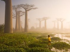 Picture of girl standing near Baobab trees, Madagascar