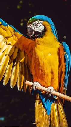 Perches For Parrots Parrot Wallpaper, Animal Wallpaper, Mobile Wallpaper, Parrot Pet, Parrot Bird, Tropical Birds, Exotic Birds, Beautiful Birds, Animals Beautiful