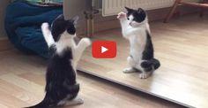 Wiske The Kitten vs The Mirror!