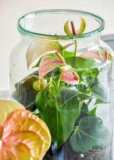 5x DIY met planten en bloemen. Zo ben je lekker bezig én maak je iets moois voor in huis. Een win-win toch? Veel plezier!   diy ideeën knutselen - diy interieur planten - diy bloemen - diy bloemenkrans - diy bloemen decoratie - knutselen zomervakantie - knutselen vakantie - anthurium kokedama - anthurium op water - Boomhutje KIT - anthurium in een terrarium Diys, Glass Vase, Interior, Plants, Easy Meals, Bricolage, Indoor, Do It Yourself, Interiors