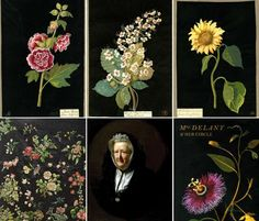 Proving creativity comes at any age: Mary Delany, the woman who invented the collage at age 72.