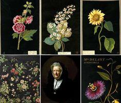 Mary Delaney(1700-1778)