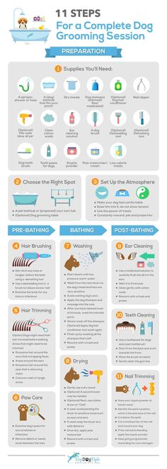Here's an infographic with 11 quick steps to your full grooming session, from preparation and choosing the right dog grooming supplies to brushing, bathing, drying and cleaning. All laid out in the order of how most pet groomers recommend to do this. Dog Grooming Shop, Dog Grooming Salons, Dog Grooming Supplies, Dog Grooming Business, Dog Supplies, Dog Grooming Styles, Poodle Grooming, Cleaning Supplies, Havanese Grooming