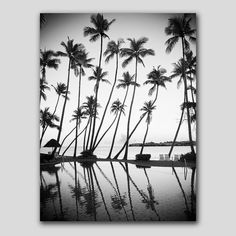 Resort Palm Trees Reflection in Black and White Printable Art This is an INSTANT DOWNLOAD of Tropical Fijian Coconut Palm Trees that I photographed reflected in the resort pool at dusk on a recent family vacation in Fiji. This dreamy print would look fabulous in any coastal style decor either framed or just mounted or printed onto a canvas. The file sizes allow you to print any sizes, up to large poster sized prints to create a real statement. See below for sizes.  Just print them on your…