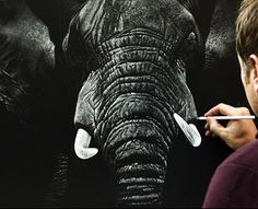 Stunning Drawings Of Endangered Wild Animals By Richard Symonds - Stunning drawings of endangered wild animals by richard symonds