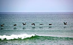 Pelicans over the ocean by Kim Black  What we see while walking on The Strand.  We hope to spot dolphins as well