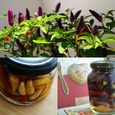 How to keep chili peppers (no boiling involved)  What you need: - vinegar - a pinch of salt