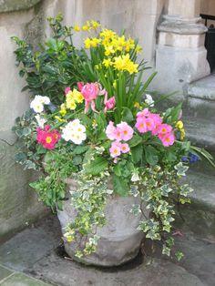 flower pot in London