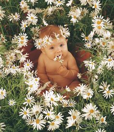 Sophie In Daisy Pot Print By Anne Geddes