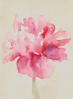 Pink Peony Watercolor by Beverly Brown Prints