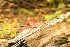 'Herbst-Idylle' von toeffelshop bei artflakes.com als Poster oder Kunstdruck $17.33