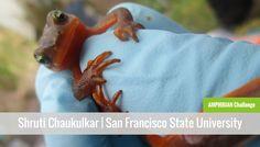 Shruti Chaukulkar Amphibian Challenge Instrumentl Crowdfunding Campaign