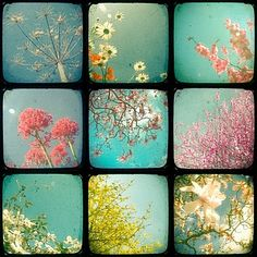 floral photography collage