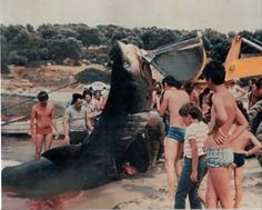 caught in GREECE! 1985...in Chalkidiki!  NO ocean for me...thats a Great White too!