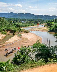 Wasserbüffel im Fluss - Bildaufbau nach der Drittelregel - Fotoideen und Fotografie Tipps von like-foto.de