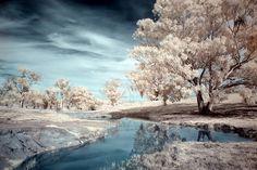 infrared photo... gorgeous!