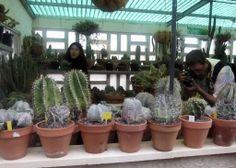 Colección particular y jardín de Jordi Larregula