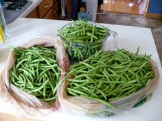 How to process garden green beans for storage - There's a Bug In My Coffee