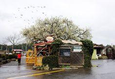 Tree House Cafe, Ganges, Salt Spring Island, BC