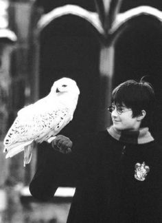 """The loss of Hedwig represented a loss of innocence and security. She has been almost like a cuddly toy to Harry at times. Voldemort killing her marked the end of [Harry's] childhood. I'm sorry… I know that death upset a LOT of people! Harry James Potter, Harry Potter Tumblr, Harry Potter World, Mundo Harry Potter, Harry Potter Pictures, Harry Potter Cast, Harry Potter Characters, Harry Potter Universal, Young Harry Potter"