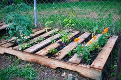 This pallet garden looks great and easy.
