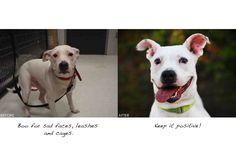 Well-Known Photographer Helps Animals Become Adopted : Ive always thought of maybe volunteering to do this
