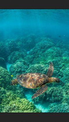 Underwater creature.